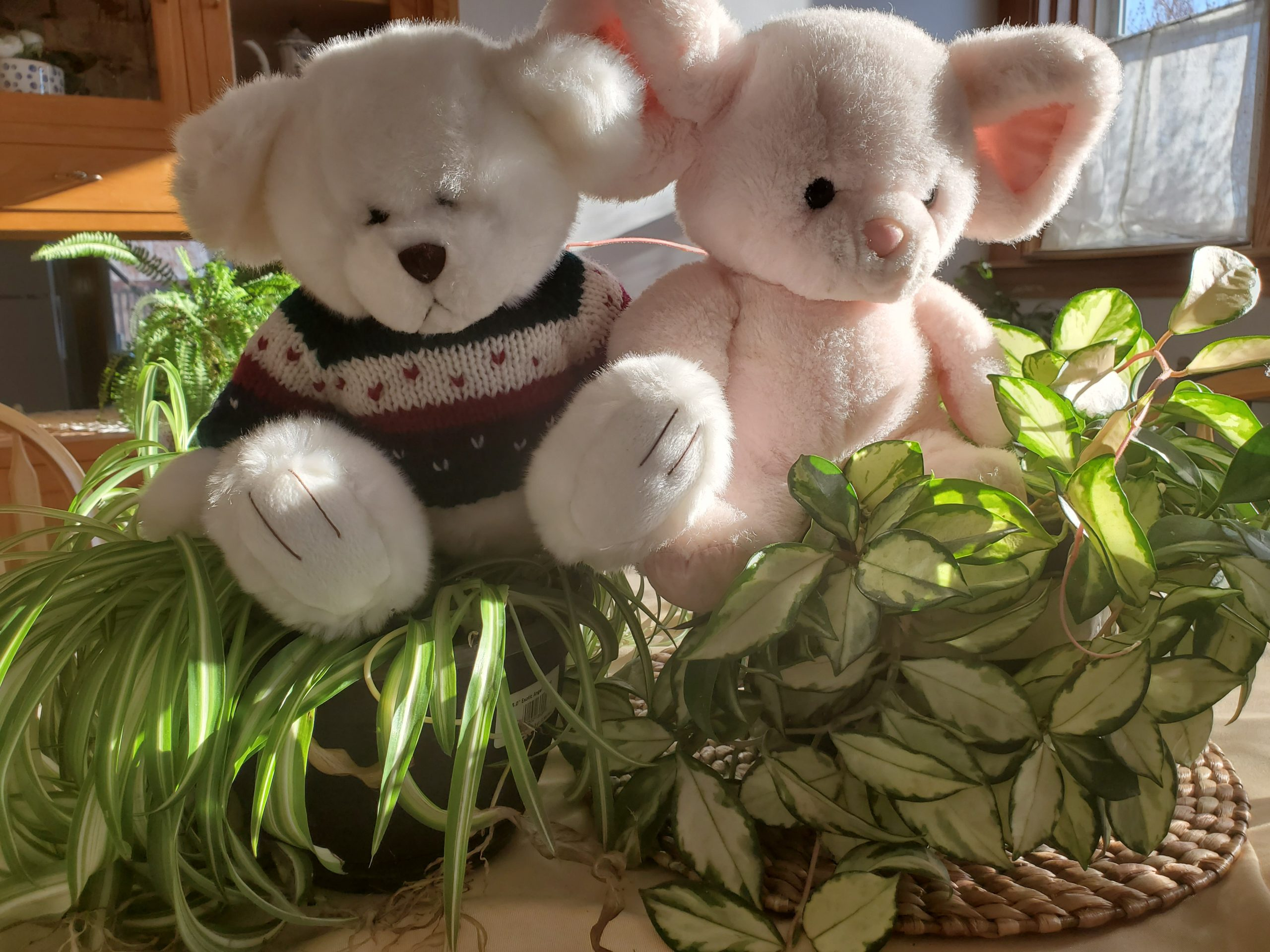 Two stuffed bears sitting on a pile of Palms and other leaves