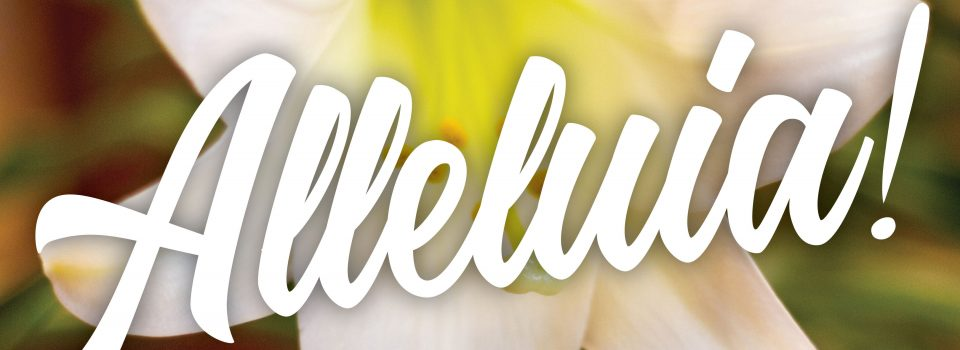 "Image of white lilly with text ""Alleluia!"""