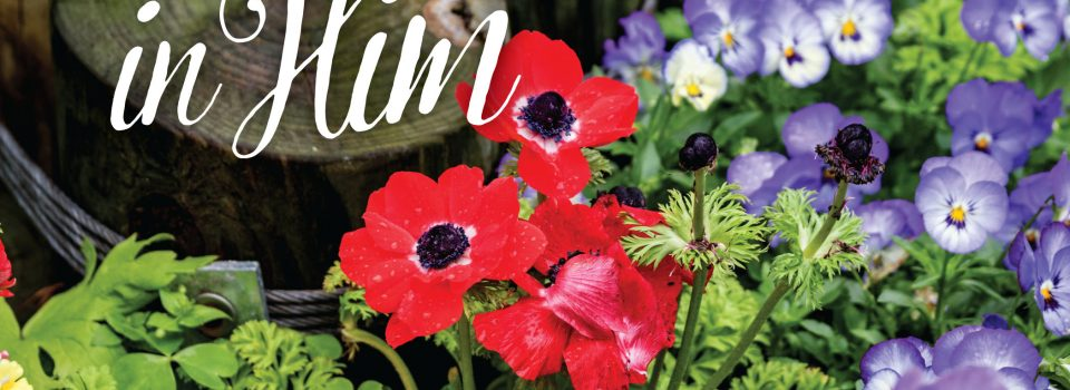 """image of flowers with text: """"find rest in him"""""""