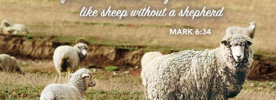 Jesus had compassion for them, because they were like sheep without a shepherd - Mark 6:34