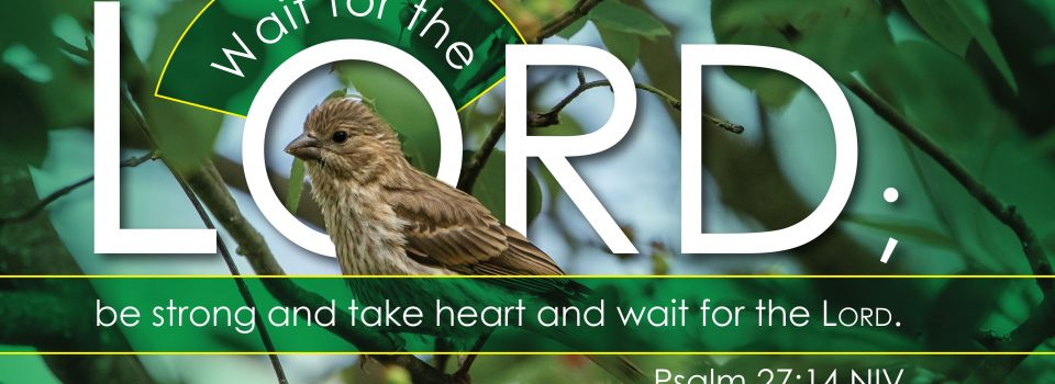 """Image of bird in a tree with text that reads: """"wait for the Lord."""""""